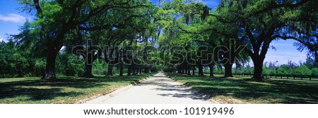 This is a tree lined road outside of San Antonio. It shows a beautiful spring day with the road separating through the center of the green trees.