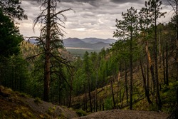 This is a view of the storm brewing over the mountains, taken from the steep terrain off Lockett Meadow, Road  in the San Francisco Peaks area near Flagstaff, Arizona.