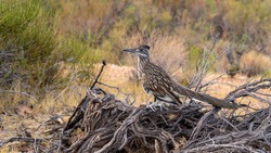 This is a wild road runner