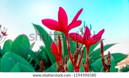 This is another fresh photo from my nature collection. Red flowers with blue sky and green leaves represents freshness. Nature is really beautiful.
