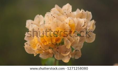 this is kagaj flower Stock fotó ©