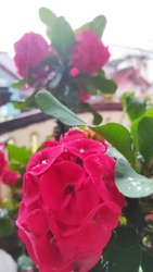 this is my evorbia flower in my garden, i took this photo in the middle of the day
