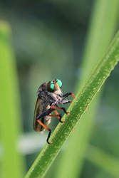 This is one of the top predator in insect kingdom