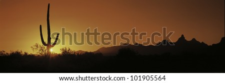 This is Organ Pipe Cactus National Monument at sunrise. Silhouetted is a Saguaro cactus.