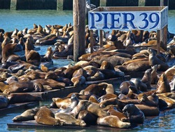 This is PIER 39 and the sea lions in San Francisco.