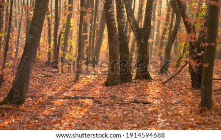 This is sunny morning in Caucasus forest in fall