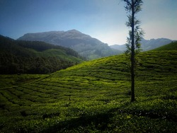 This is the photo of Munnar , one of most visiting hillstation of kerala. This includes tea plantains and trees and Aravile Mountains.