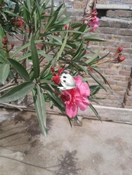 This is the picture of butterfly on the flower.In this picture you can see a beautifull butterfly and beautifull nature  scene of flower.