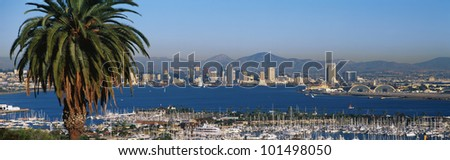 This is the San Diego Bay and harbor. There is a large palm tree to the left and many boats moored in the harbor.