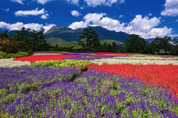 This is the Summer Landscape at Kuju flower park in Oita Prefecture, Japan.