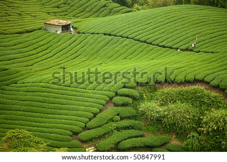 This is the very famous area known for hand-picking of tea