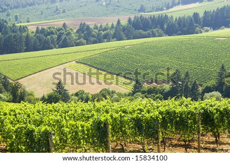 this is Vineyard patterns in the dundee hills oregon.