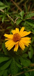 This is yellow single flower. Beutiful flower green tiny leaves. This is picture of uttarakhand. the amazing beautiful flower have yellow colour patels. This is called yellow single flower. The beauti
