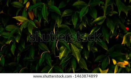 This leaf backdrop is a beautiful backdrop for any situation, presentations, computer backrounds, and many more. (20mp) #1463874899