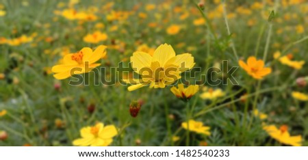 This photo is best yellow flower