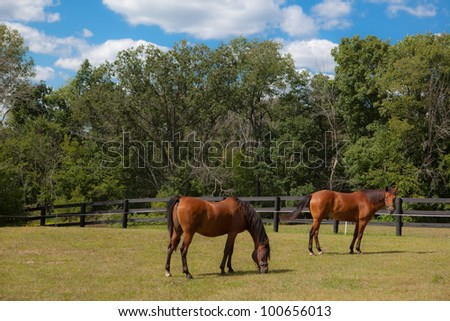 This photo shows two brown horses grazing in a pasture.
