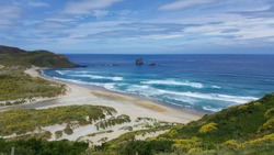 This photo was taken at Sandfly Bay, New Zealand. It combines coastal views with wildlife viewing. There are also sand dunes and steep sandy slope.