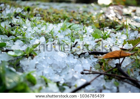 this pic show many pellet of hail on grass field during thunderstorms.