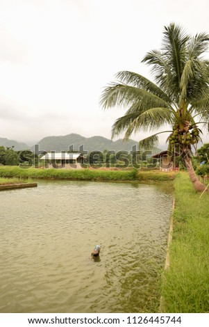 this pic show the earth pond of aquaculture with bluesky background located on remote rural in Thailand