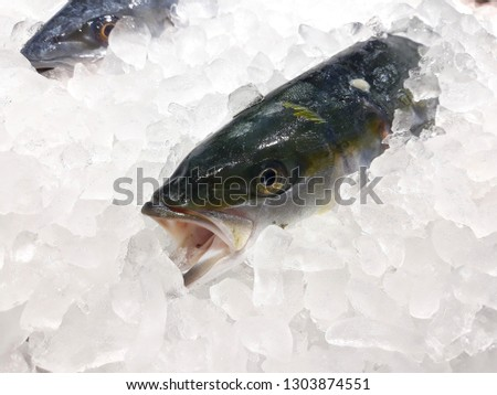 this pic show the Mackerel fish freezing in the Fish shop, with Ice for preservation