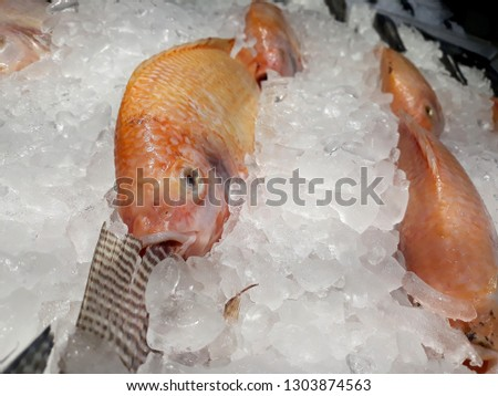 this pic show the Red Tilapia fish freezing in the Fish shop, with Ice for preservation