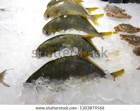 this pic show the Silver pomfret fish freezing in the Fish shop, with Ice for preservation