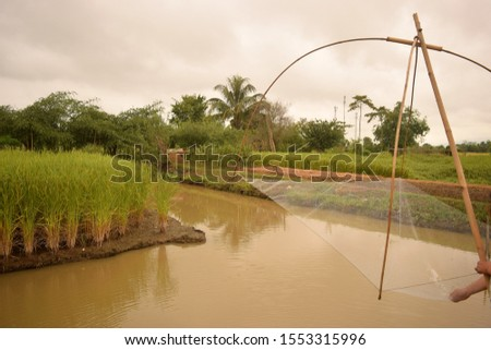 this pic shows rice field in fish pond cultured with fishing dip net, aquaculture farm in countryside Thailand, this is my research project