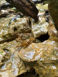This picture is a closeup of an amazingly colored crawdad that is surrounded in beautiful and reflective wet rocks. This picture was taken with an HD camera