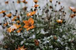 this picture shows a bunch of flowers at the beginning of winter. we can see the very first snow of the year