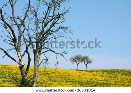 this picture shows the contrast between a dead tree, which is already rotten, and a fresh field of dandelions in the background