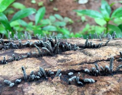 This picture shows the fungi that formed on a decaying plant.