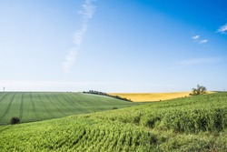 This region in the Czech Republic, the southern part of Moravia, is unofficially known as 'Moravian Tuscany' (Moravské Toskánsko). The green, rolling hills turn yellow with rapeseed fields in spring.