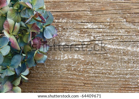 This rich colorful dried Hydrangea is set against a soft-focus wooden board, open on the right side for copy space.