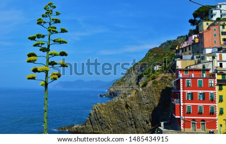 This single tree standing tall in Cinque Terre is photogenic like no others. Expecially next to the brightly colored houses in the village and the bright blue sea