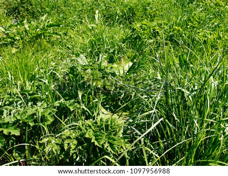 This thicket of lush green spring grass and other British plants makes a good background image #1097956988