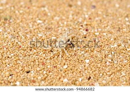 This tiny little crab is nearly invisible on the sand (which is star shaped, btw)