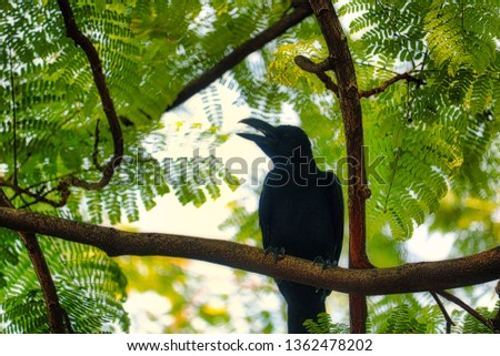 This unique picture shows a beautiful black raven. This great bird photo was taken in the lumpini park in Bangkok.