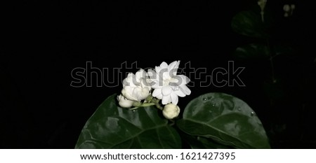 this white flower is very beautiful and beautiful