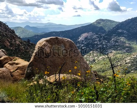 This wildflower image was captured on trail 261 in the Granite Mountain Wilderness of boulders and steep grades. This beautiful area is located west of Prescott, Arizona. #1010151031