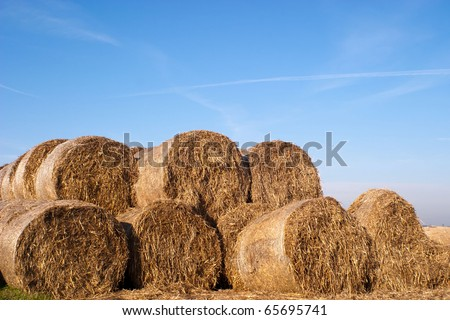 This year's bundle of straw yellow with golden color #65695741