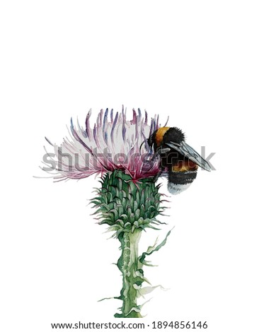 thistle and bumblebee. watercolor illustration isolated on white background. poster for use in interior design Stock photo ©