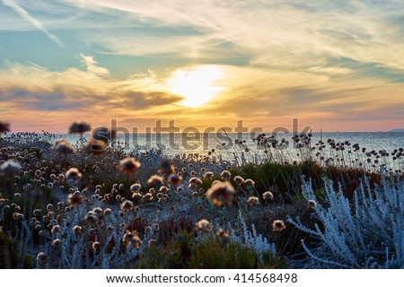 Thistles on dunes / Sunset at northbeach of sardinia - Italy / meditation mood