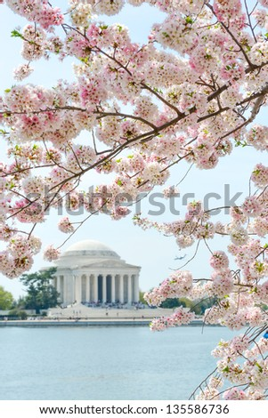 Thomas Jefferson Memorial during cherry blossom festival in Washington DC United States
