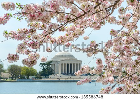 Thomas Jefferson Memorial during cherry blossom festival in Washington DC United States