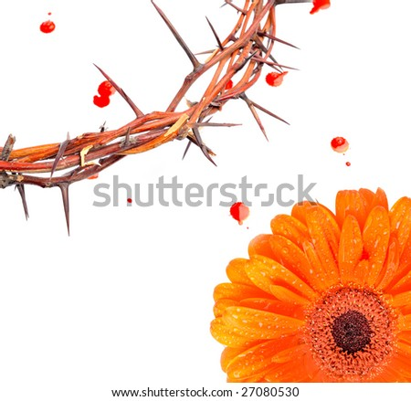 ... blood drops and red flower isolated on white background - stock photo