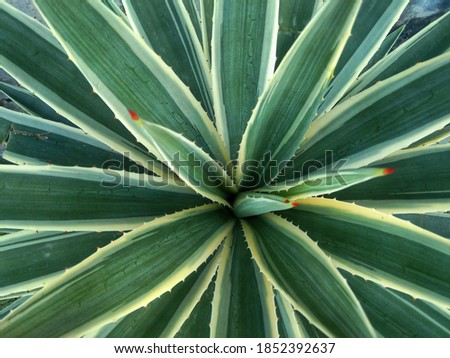 Thorny green plants . its tropical plant