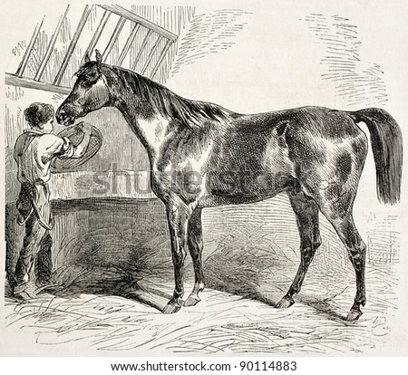 Thoroughbred English horse old illustration. By unidentified author, published on L'Illustration, Journal Universel, Paris, 1858