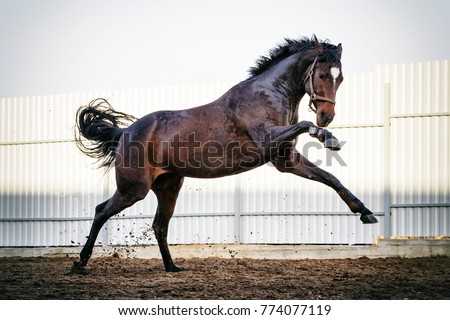 Thoroughbred horse action #774077119