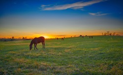 Thoroughbred horses grazing at dusk with setting sun.