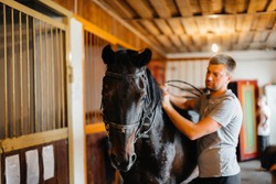 Thoroughbred stallion close-up in the stable at the ranch. Animal husbandry and breeding of thoroughbred horses